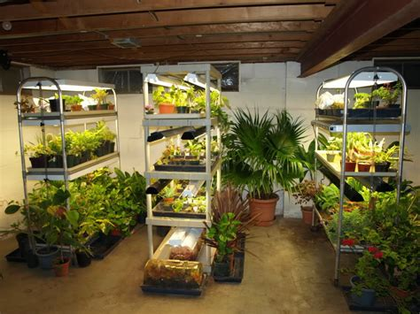 tips  set   affordable indoor grow space