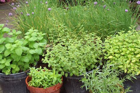 herb pots outdoor categories outdoor herb garden ideas 732 hostelgarden net