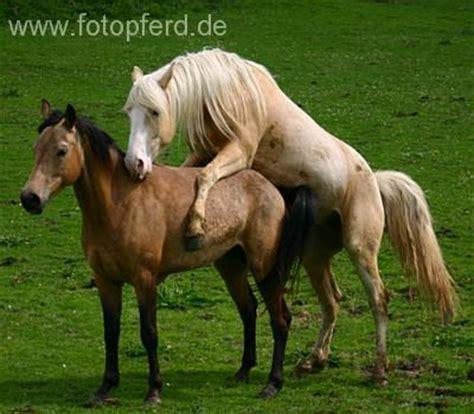 pferde decken lassen willkommen auf dem vrh rosement hill zuchtstation