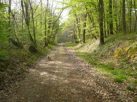 photo chemin en sous bois vraiment tr 232 s agr 233 able