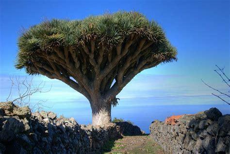 imagenes animales y plantas en peligro de extincion plantas en peligro de extinci 243 n plantas