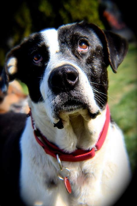 pets  adoption   mutts great  small  yakima