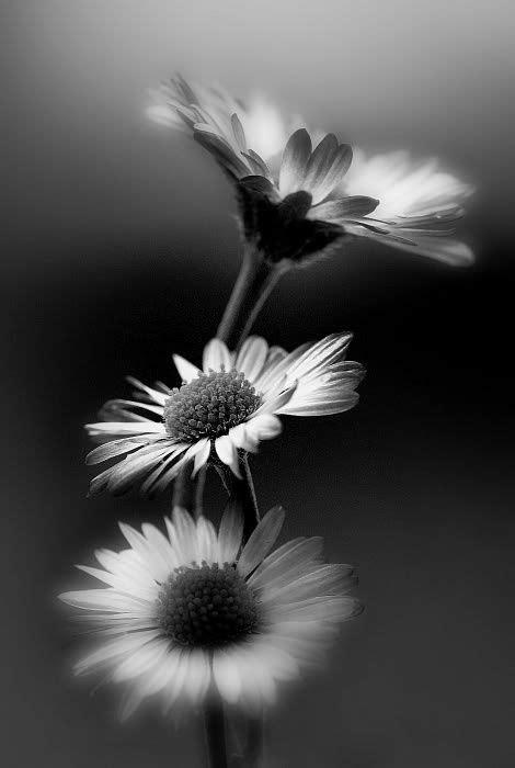 love themes be noir 201 pingl 233 par ad 233 lie w 233 ron sur en noir et blanc pinterest