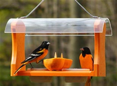 Oreo Bird Feeder Diy Plans Oriole Feeder Plans Pdf Outdoor Swing Plans