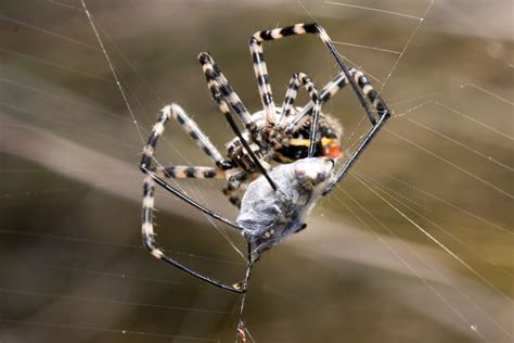 how to kill spiders in house how to get rid of spiders kill control spiders in the