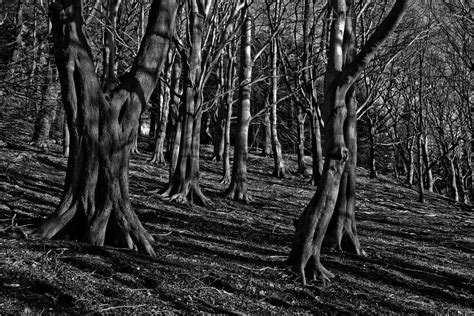 the in the chor trunk an blanc mystery books free stock photo of forest