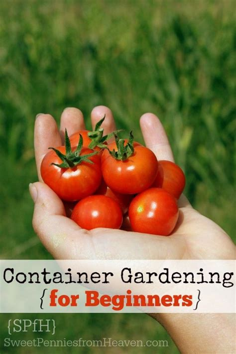 How To Container Garden Vegetables Guide For Beginners Gardening For Beginners Vegetables