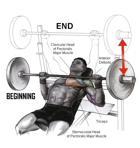 muscles used bench press incline barbell bench press ethnogym