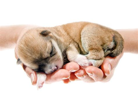 really baby puppies baby puppies and kittens togetherpuppy pictures puppy kitten litle pups