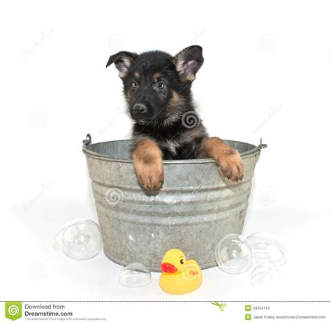 puppy tubs bath time stock photo image 34934110