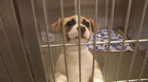 puppy mill laws ohio lawmakers proposing pet store puppy mill wdtn