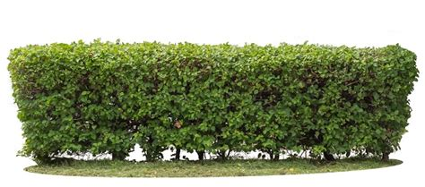 lights for small bushes how to trim hedges and shrubs