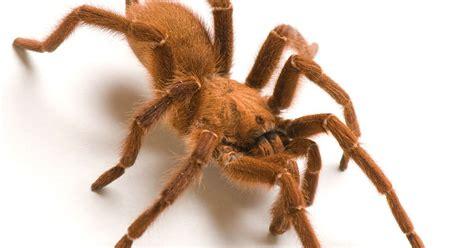 escaped tarantula grounds flight  baltimore  atlanta  spider spotted  baggage