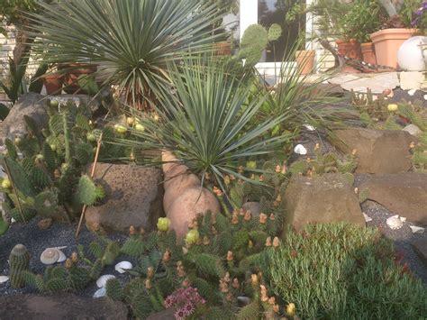 palmen in deutschland 6132 palmen in deutschland palmen und co exoten gefunden in