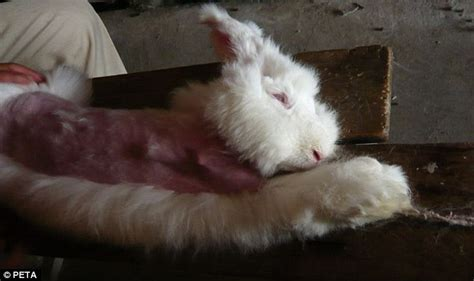 Sweater Racoon Dep Clothing angorawol konijn stichting dierbewustleven