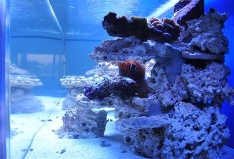 Live Rock Aquascape Designs by 17 Best Images About My Aquascape On Different