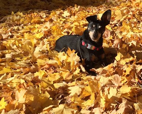 boomerang tags bloggerswanted sign up for funfall4furryfriends giveaway hop