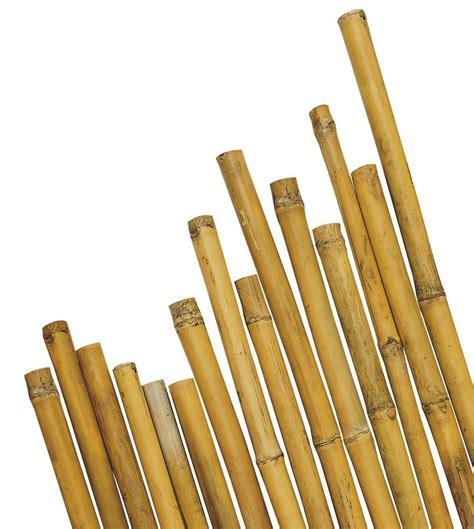 Vasi Per Bamboo by Canna Bamboo 2 4mt Vasi Giardino Giardinaggio