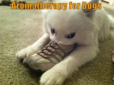 aromatherapy for dogs 187 aromatherapy for dogs