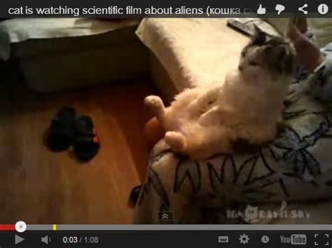 film lucu kucing kucing yang sedang fokus nonton film alien video