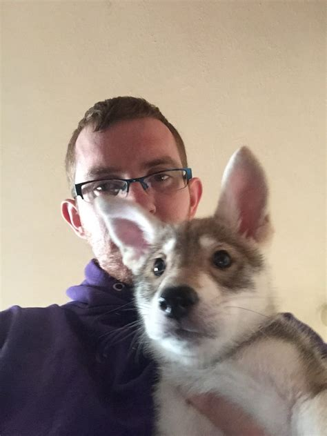 czechoslovakian wolfdog puppies for sale czechoslovakian wolfdog x puppies birmingham west midlands pets4homes