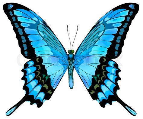 Beautiful vector isolated blue butterfly | Stock Vector ... Insect Drawings Clip Art