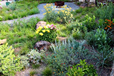california native plants gardens by gabriel inc mediterranean meadow loversiq