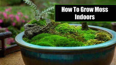 25 best ideas about mos terrarium on pinterest mostuin