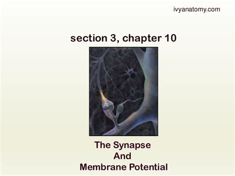 section 3 chapter 10