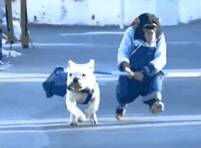 Lol Meme Gif - dog running gif find share on giphy