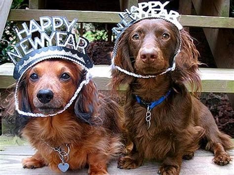 new year animals relationship 12 adorable dogs ready to celebrate new year s
