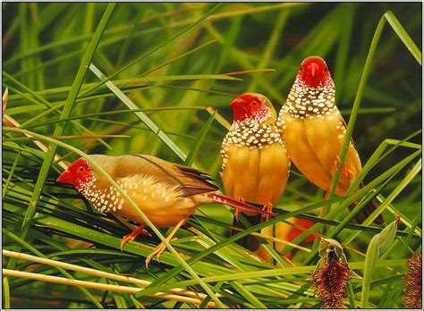 beautiful birds phots wallpapers fair world s most beautiful birds pictures free