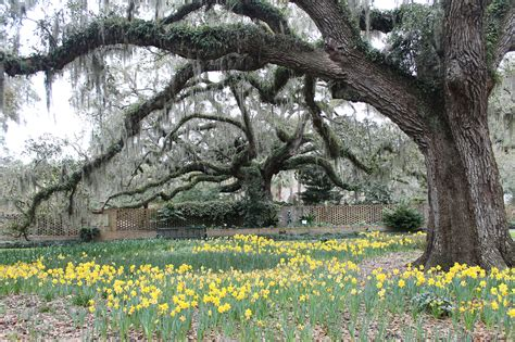 Gueros Oak Garden by Is There Maybe Here One Of These Days