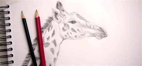 M 233 Thode Tr 232 S Simple Pour Dessiner Une Girafe Et Faire Son Apprendre A Dessiner Une Tete De Lapin Dessins Simples L