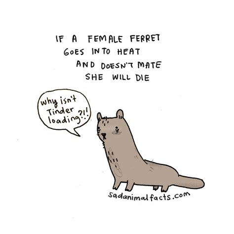 sad animal facts sad animals facts that ll make you slightly depressed