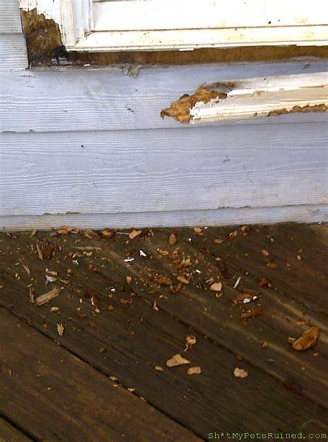 Termites In Furniture by Termites Nope Retrievers Sh T Pets