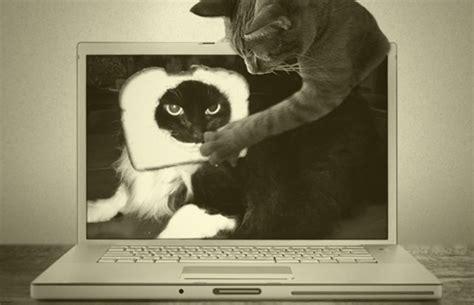 grumpy cat   funniest cat memes  complex