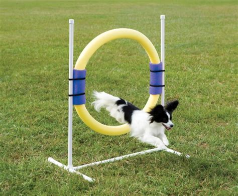 how to agility how to make a agility jump at home dogs hairstyles