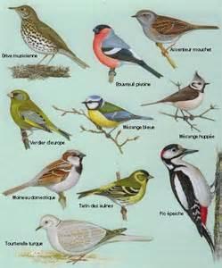 differents oiseaux jardin identification plumes d oiseaux