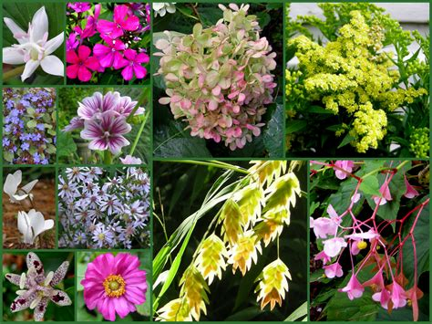 october gbbd a few fall favorites for flowers carolyn s shade gardens