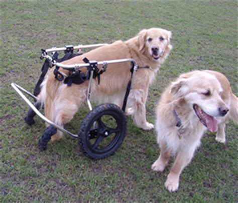 dragging back legs what dogs dont shed or dont shed a lot yahoo answers breeds picture