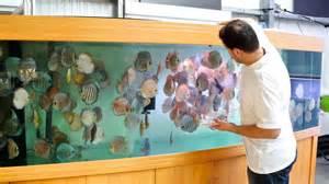 3000 Liter Diskus Aquarium   800 Gallon Discus Tank   YouTube