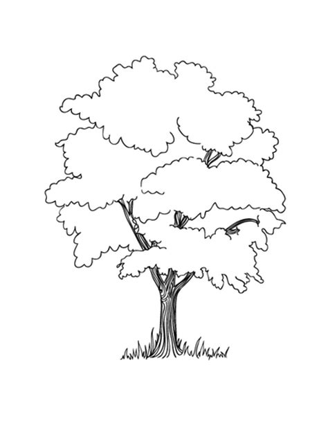 coloring book page apple tree free coloring pages of apple tree