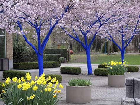 trees for backyard bright painting ideas for decorating trees creative