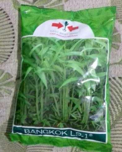 Jual Benih Kangkung Bangkok jual benih kangkung bangkok 1 kg panah merah bibit