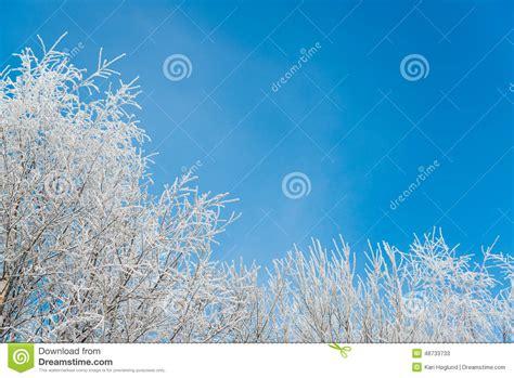Frozen Sky Blue frozen tree stock photo image 48733733
