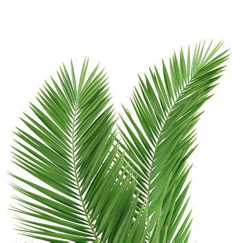 Poster Set Of 2 Tropical Leaves Cactus 2xa4 shop palm leaf decorations on wanelo