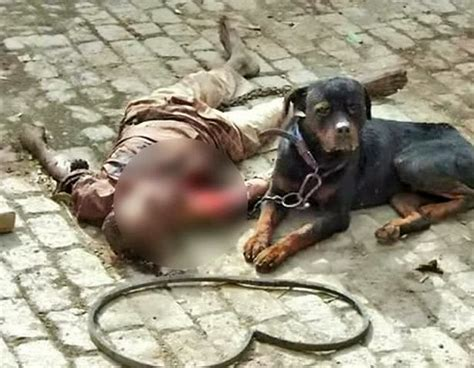 killer dogs killer mauls owner to then feasts on his flesh as helpless forced to