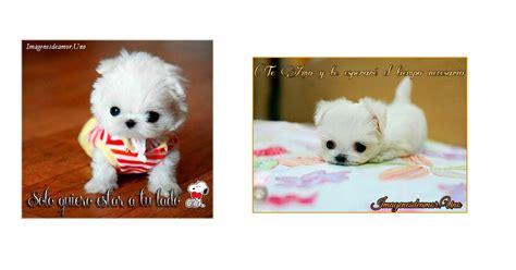 imagenes tiernas de perritos 10 im 225 genes tiernas de perritos con frases de amor