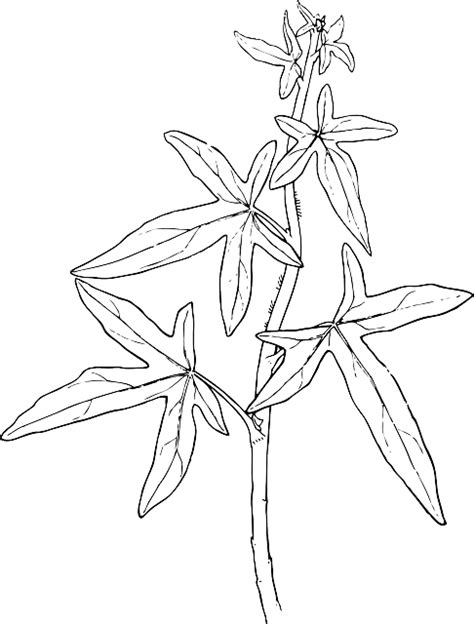 ivy joy coloring pages free pictures cartoon 6077 images found
